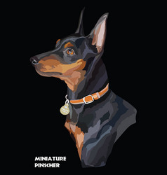 Miniature pinscher colorful portrait vector