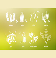 White cereal grains icons rice wheat corn oats vector