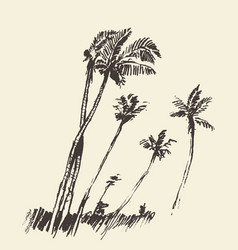 Silhouette of palm trees drawn sketch vector