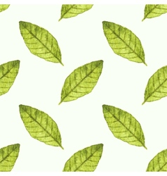 Seamless watercolor pattern with bayleaf on the vector image vector image