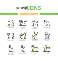 cat breeds - modern line design style icons set vector image