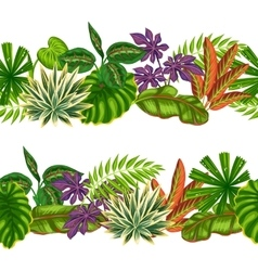 Seamless borders with tropical plants and leaves vector