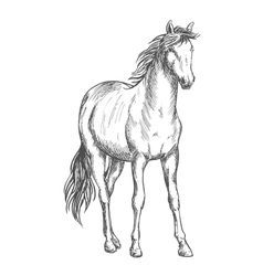 Satnding white horse sketch portrait vector image vector image