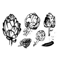 artichokes set vector image