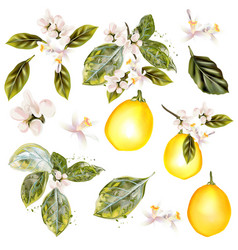 collection lemon with flowers in vintage style vector image