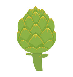 colorful artichoke isolated on vector image