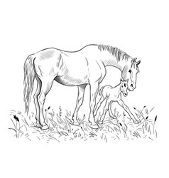 mare and foal vector image