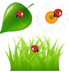 Green Set With Ladybug vector image