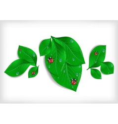Green leaves with ladybirds and waterdrops vector image