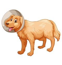 Little dog with collar vector