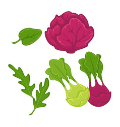 different green and red vegetables vector image vector image