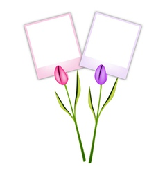 Two Beautiful Tulip Flowers with Blank Photos vector image vector image