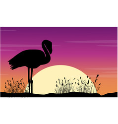 art flamingo scene at sunse silhouettes vector image vector image
