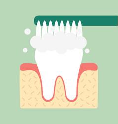 brushing teeth vector image
