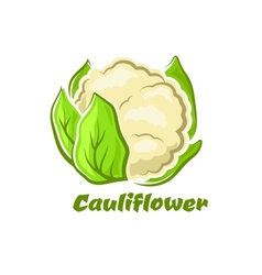 Cartoon cauliflower vegetable with green leaves vector image