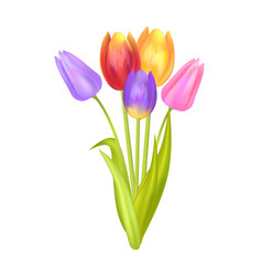 Colorful bouquet with three tulips of multi color vector