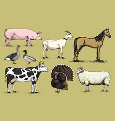 farm animals pig goat horse sheep cattle cow vector image