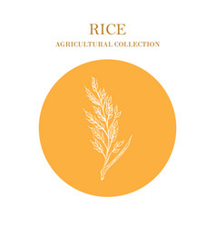 rice plant hand drawn agricultural crops vector image