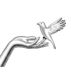 Female hands release a white bird vector