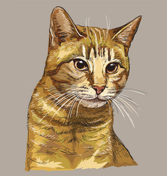 Hand drawing colorful cat 2 vector