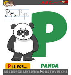 Letter p from alphabet with panda animal character vector