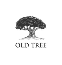 oak tree concept logo template vector image