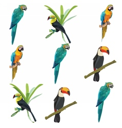 Parrots set collection vector