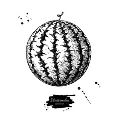 Watermelon drawing isolated hand drawn vector