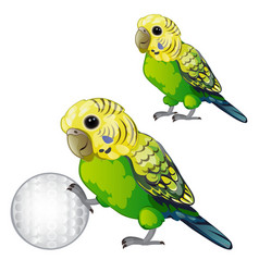 Wavy green parrot or budgerigar isolated on white vector