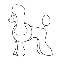 contour poodle isolated on white background vector image vector image
