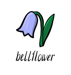 flower of bell vector image