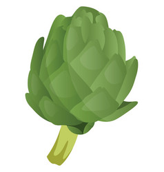 Green artichoke vegetables on white background vector