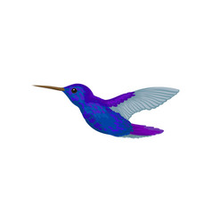 Hummingbird tiny colibri with bright blue plumage vector