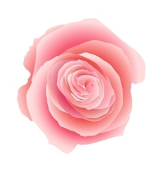 Pink rose isolated EPS 10 vector image