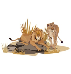 African Lions vector image