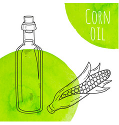 hand drawn corn oil bottle with green watercolor vector image vector image