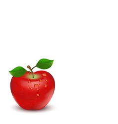 Apple on white background vector