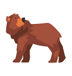 Brown bear wild forest animal character cartoon vector