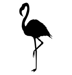 Flamingo silhouette vector
