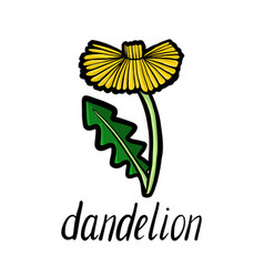 flower of dandelion vector image