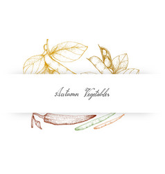 Hand drawn autumn vegetables of fava beans and okr vector