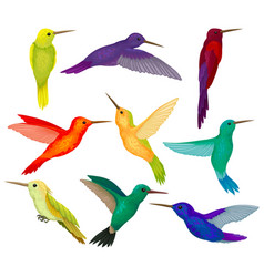 Hummingbirds sest tiny birds with bright colorful vector