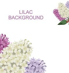 Lilack buq vector
