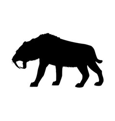 Saber toothed tiger silhouette extinct mammalian vector
