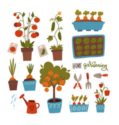 seeds and seedlings set germination sprouts vector image
