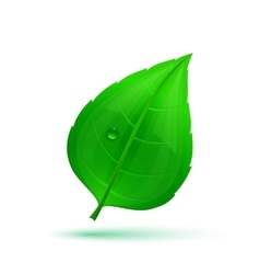 Spring green leaf with drops of water vector image vector image