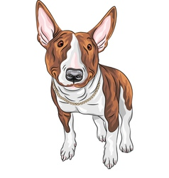 Bull Terrier Dog breed vector image vector image