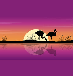 collection of flamingo on lake scene silhouettes vector image vector image