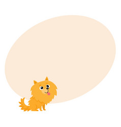 cute little long haired pomeranian spitz dog vector image vector image