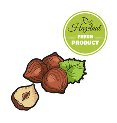 Colored hazelnut on white vector